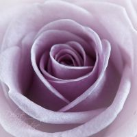 Delicate by Nature by eyedesign