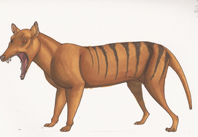 Thylacine by Hyourin