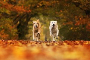 Autumn Dogs by KiwiTakeFlight