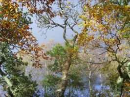 Trees In Autumn by TanzieB