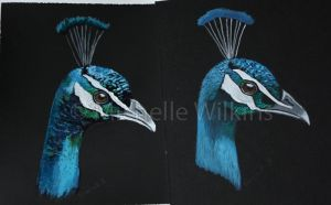 Peacock practice pieces by DragonsDust