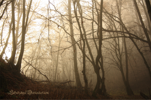 a misty forest by ElyneNoir