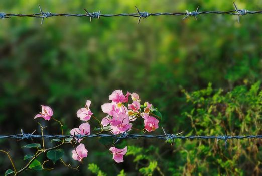 barbed bloom by yellowminded