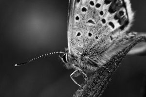 Moth by Whimish
