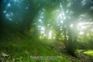 Misty forest by Koljan