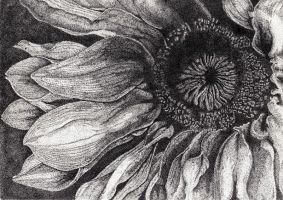 sunflower by LordUltor