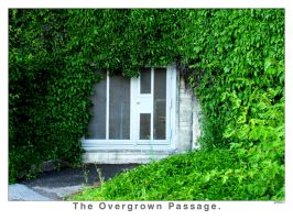 The Overgrown Passage by art-exp