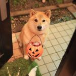 Trick Or Treat by marustagram