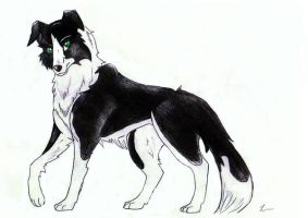 Flint-Border Collie Charrie by Zanfandel