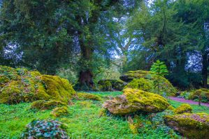 Fairy Glade Background Stock by little-spacey
