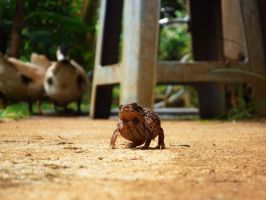 Come and Kiss Me Mr. Frog by titis-pratiwi