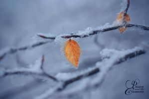 Winter's Cold Embrace II by PassionAndTheCamera
