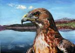 hawk -acrylic by xxx-ellie