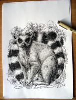 Lemur drawing by Houndourka