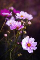 September Flowers by Justine1985