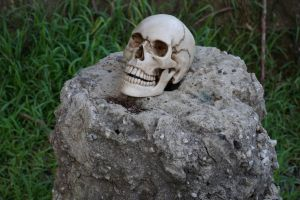 Human Skull 012 - HB593200 by hb593200