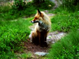 fox by assco