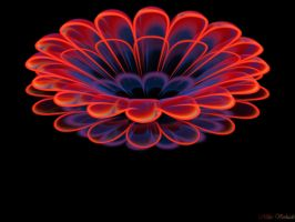First Fractal flower by plantm