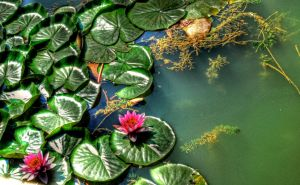 Olympic Lilypads by NullCoding