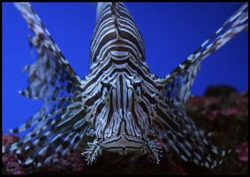 Lionfish -by fraziu by art4oceans