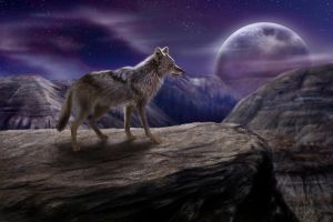 The Lone Coyote WIP8 by jocarra