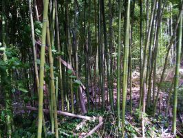 Bamboo 4 by AlissaDStock