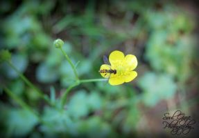 Hoverfly on Yellow Flower by GothicAmethyst