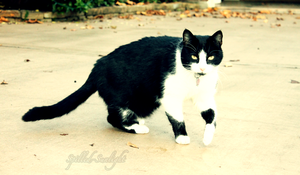 Jack the Cat by Spilled-Sunlight