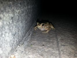 Toad 5Oct2014 by RiverKpocc