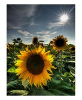 Summer Greetings by focusgallery