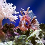 Scorpionfish by FauxHead