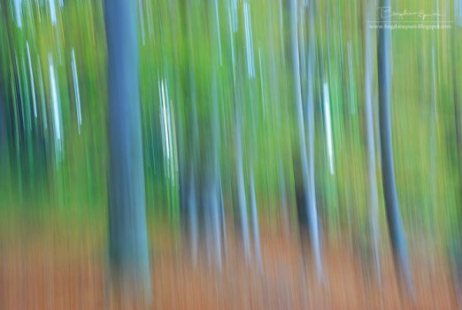 Forest paintings by BogdanEpure