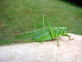 Jimminy cricket by karliosi