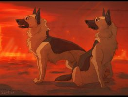 German shepherd dogs by Seanica