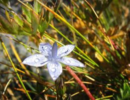 Blue Flower by MikeMS