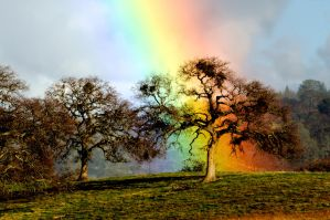 Sony Rainbow Oak by kayaksailor