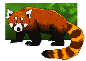 Red Panda by painted-flamingo