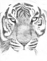 A forever unfinished Tiger by sphynx101