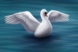 Swan by Ivestro