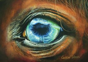 Horse Eye by cowgirlcait