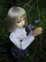 Bluebells by nineveh-resin-family