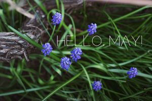 Hello, May! by Lilplague