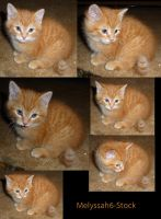 Kitten Stock Collage III by Melyssah6-Stock