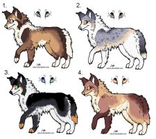 Collie adoptables CLOSED by Velyra