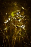 the leaves are greeting by Twinelens