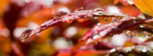 Raindrops on Red by smallcraig1606