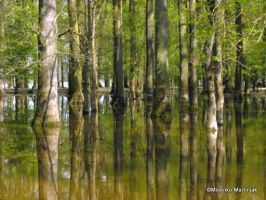 Flood Forest by skylight11