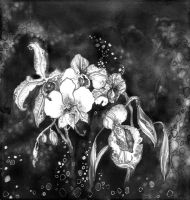 White orchids by LisaLins