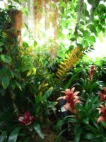 tropical undergrowth 1.1 by meihua-stock