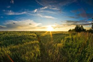 A field of wheat and sunset by Levin21